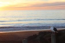 Defiant Seagull